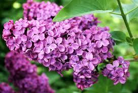 Τα λουλούδια του Πάσχα